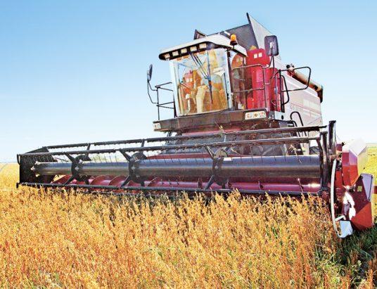 уборка урожая, зерновые