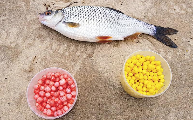 рыба, приманка