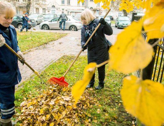 опавшая листва, минск