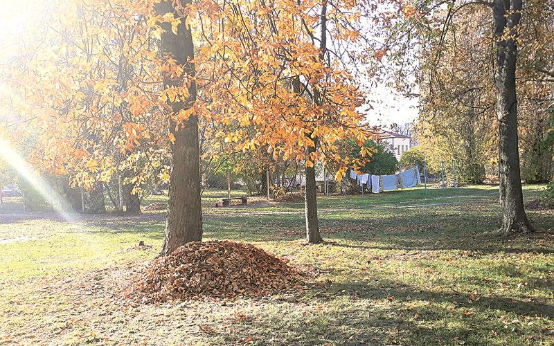 осень, уборка листвы