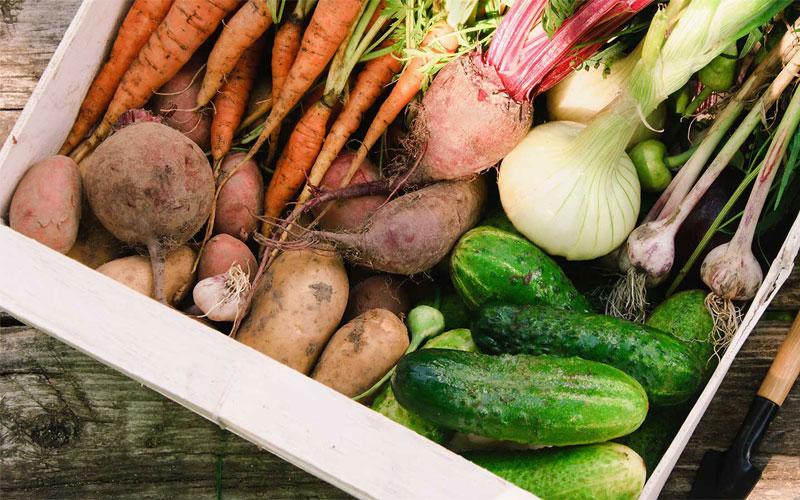 овощи, корнеплоды