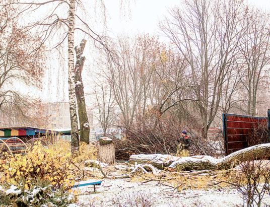 вырубка деревьев, серебрянка