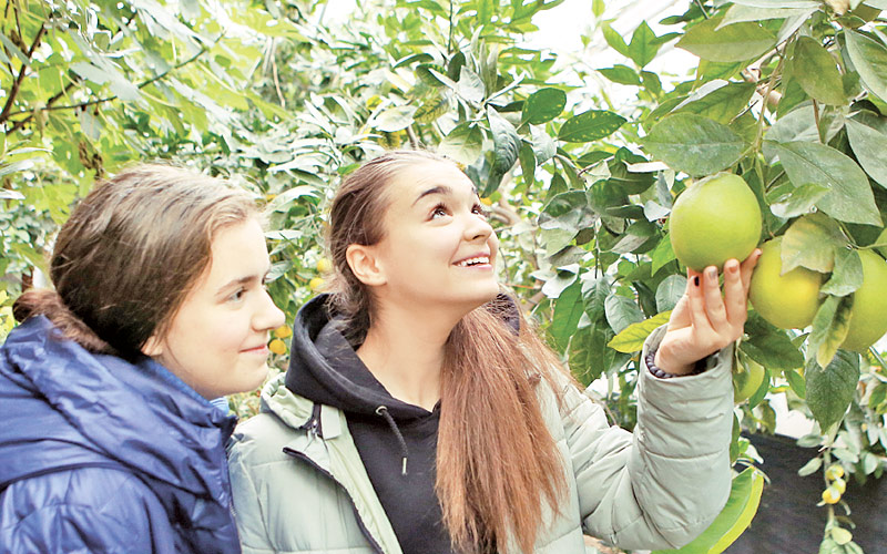 лимонарий, ботанический сад
