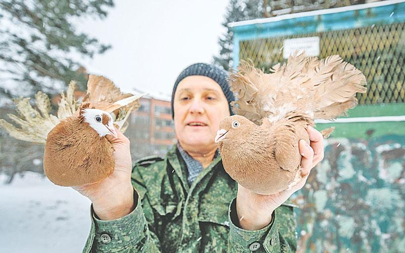 голуби, разведение голубей