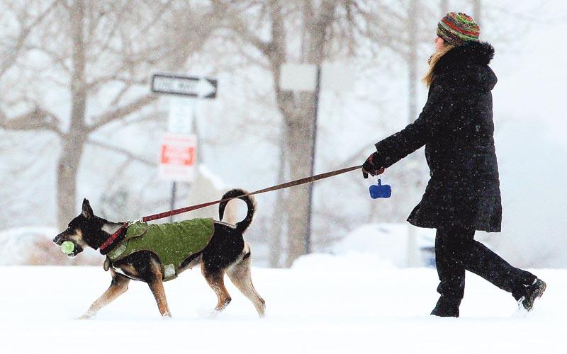 выгул собак, человек выгуливает собаку